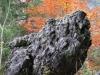 2005-6-natura